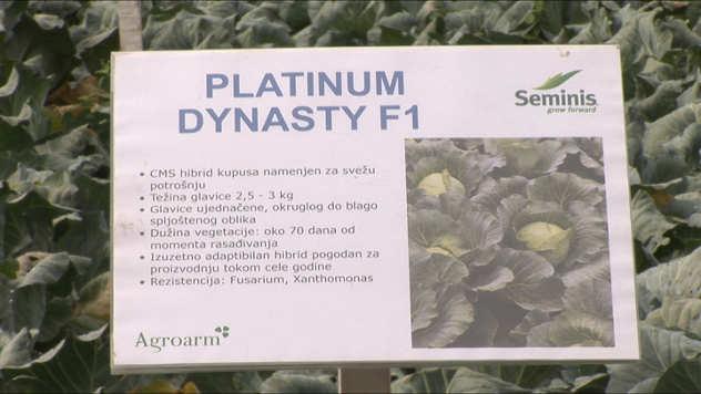 Platinum Dynasty F1 @agromedia