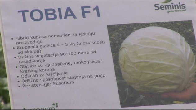 Tobija F1 @agromedia