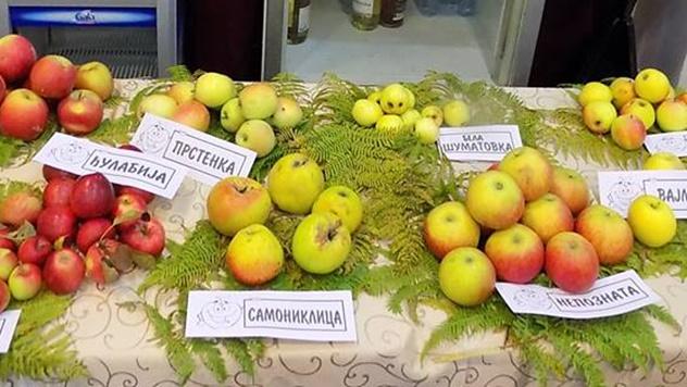 Stare sorte voća i povrća - © Dejan Davidović/Agromedia