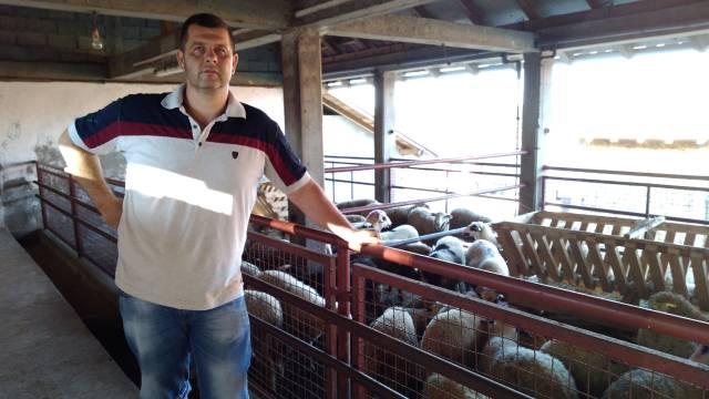 Počeo izvoz jagnjadi na tržište Evropske unije - © Dejan Davidović/Agromedia