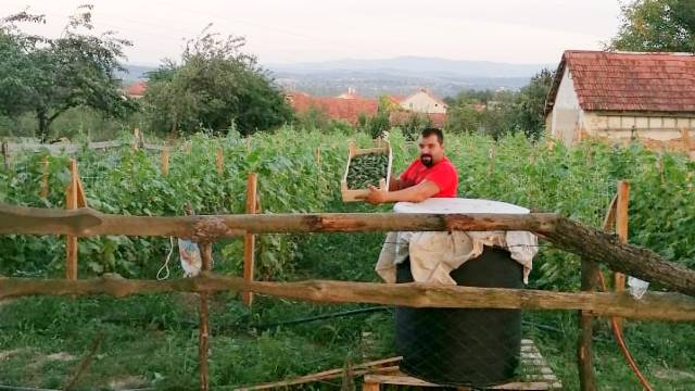 Šta posaditi na 5 ari: Kornišon donosi zaradu i sa male njive - © D.Davidović/Agromedia