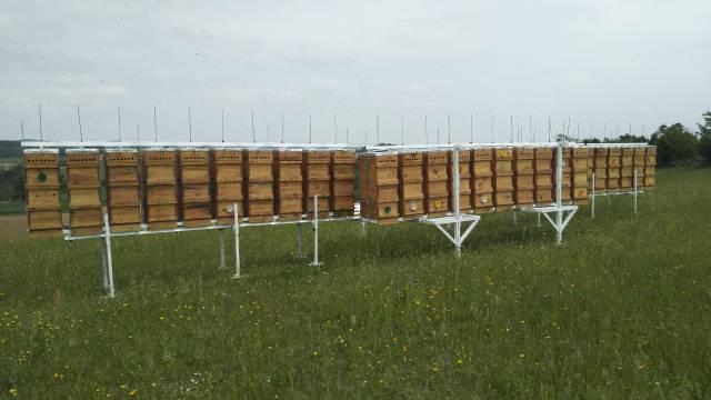 Da li će biti dovoljno meda i po kojoj ceni?- © Dejan D. Agromedia
