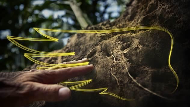 Jak i moćan korenov sistem - © Dekalb
