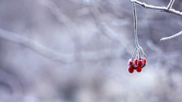 Zaleđeno voće - ©Pixabay