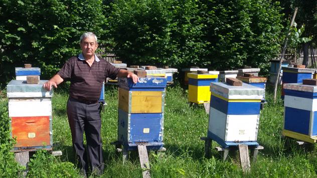 Radoslav Karić u svom pčelinjaku - © Julijana Kuzmić / Agromedia