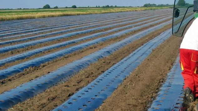 Upotreba folija u gajenju povrća i jagodičastog voća može znatno da poveća prinos i poboljša uzgoj - © Intersad