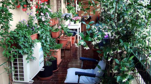 Biljke na terasi - © Foto:www.pixabay.com