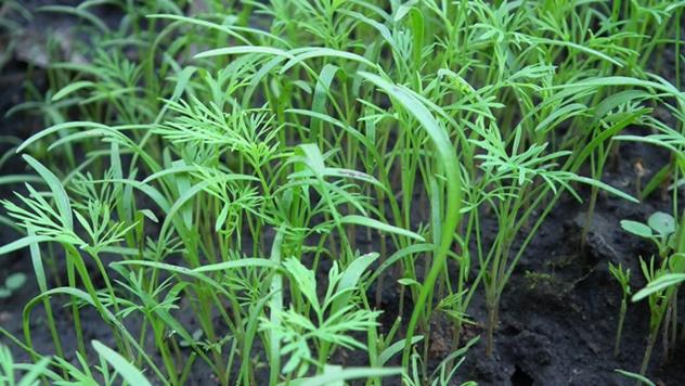 Pažljivo prilikom planiranje sadnje: Ovo su biljke koje mogu da izazovu iritaciju kože - © Pixabay
