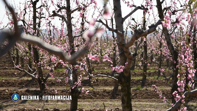 Zaštita jabuke i breskve - © Galenika-Fitofarmacija