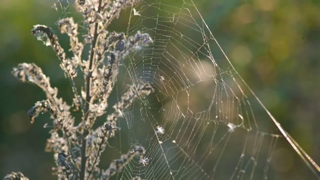 Kako oterati paukove iz kuće na prirodan način - © Pixabay