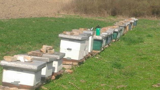 Pčelari organizovaniji od malinarqa - © Agromedia
