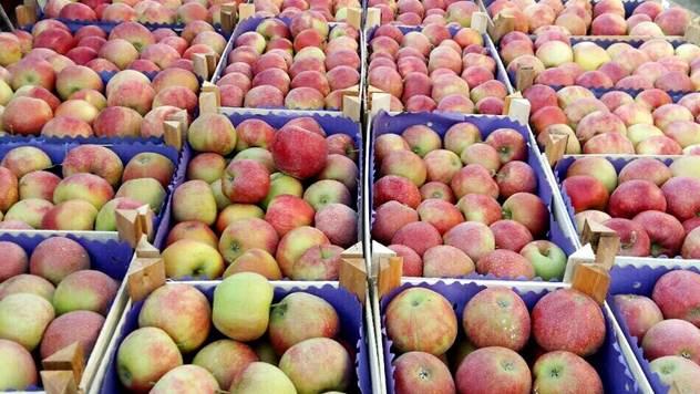 Domaće jabuke - © Vladimir Pantelić/Julijana Kuzmić