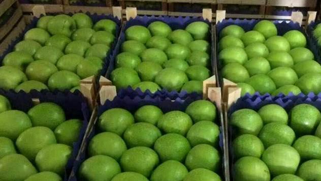 Zelene jabuke - © Vladimir Pantelić/Julijana Kuzmić