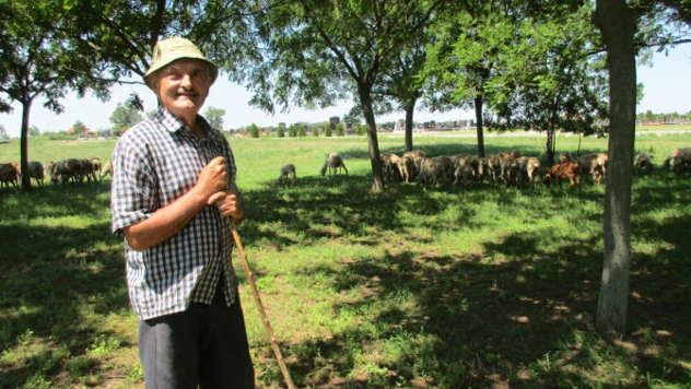 Radovan Cucin, pastir iz Kikinde - © Foto: Danijela Jankov