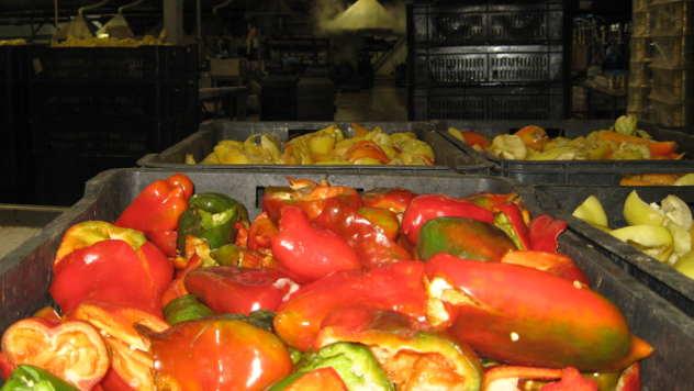 Proizvodnja povrća u Topoli - © Foto: Biljana Nenković