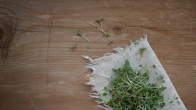Gajenje klica u papirnim salvetama ili platnu