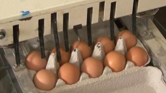 Pakovanje jaja - ©Agromedia