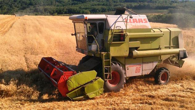 Kombajniranje pšenice - © Julijana Kuzmić