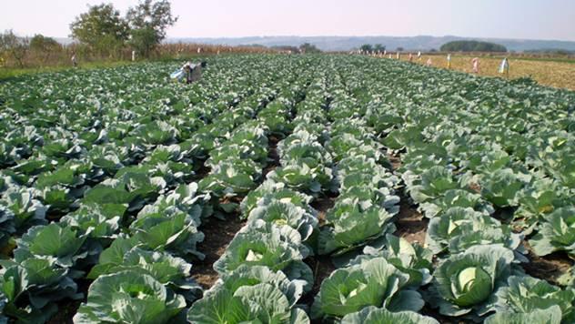 Konus Glorija brine i o kvalitetu đubriva koje poljoprivrednici mogu da koriste - © Konus Glorija