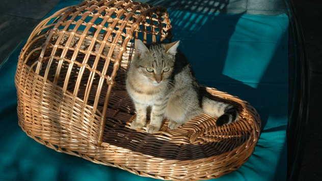 Korpa od pruća za mačku - © Foto: Danijela Jankov