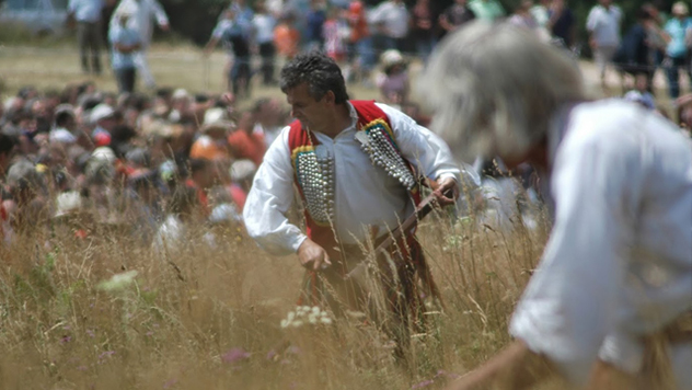 Kosidba na Rajcu - © Agromedia