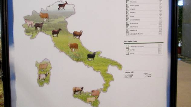 Italijanske koze koje daju najviše mleka - © Agromedia