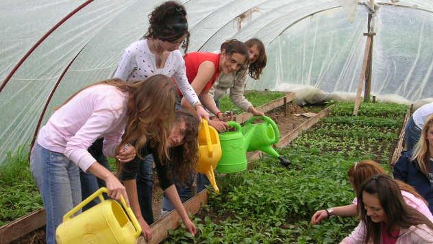 Zalivanje rasada u plasteniku - © Foto: arhiva Poljoprivredno-hemijske škole Kraljevo
