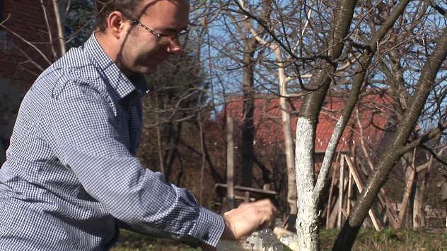 Krečenje stabala voća - ©Agromedia