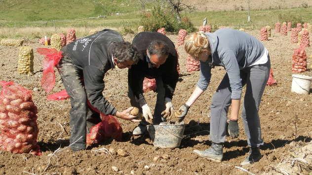 Sve teže naći radnu snagu za rad u polju - © Foto: Željko Dulanović