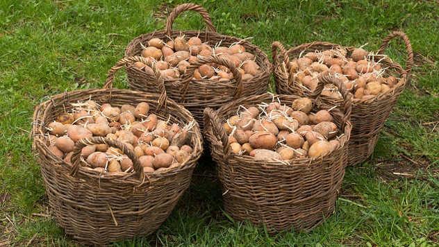 Krompir u korpama - ©Pixabay