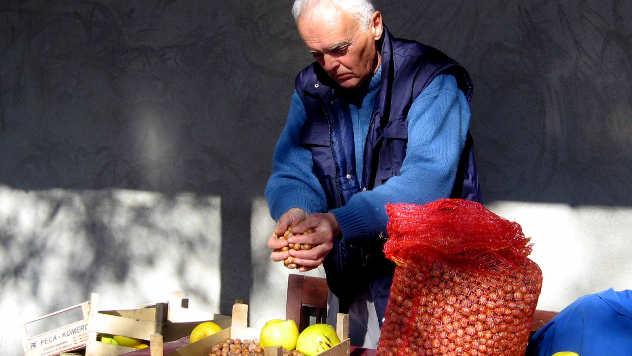Vasa Vezmarević prebira rod lešnika - © Foto: Biljana Nenković