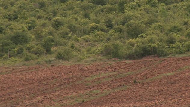 Krrčenje šume na račun obradivih površina, Leskovac