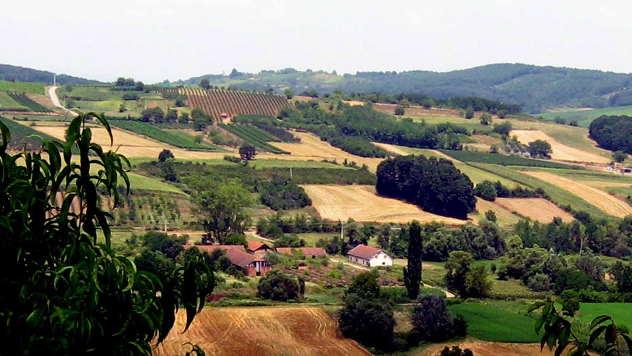 Panorama levačkog vinogorja - © Foto: Biljana Nenković