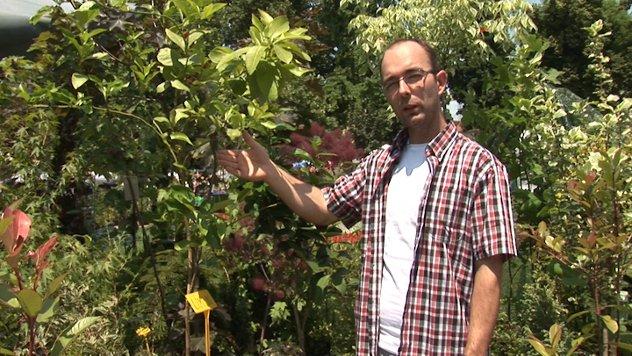 Dipl. inž. Vladimir Milutinović objašnjava kako se gaji limun - ©Agromedia