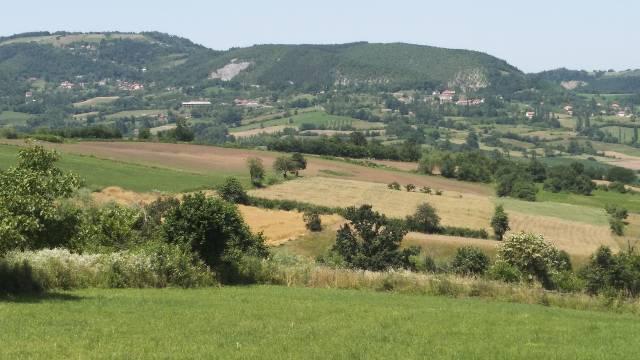 Uzgoj lekovitog bilja šansa za mala poljoprivredna gazdinstva - © Dejan Davidović /Agromedia