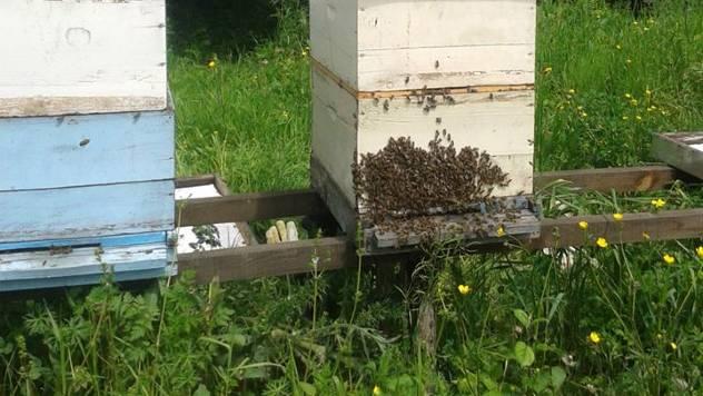 Deficit meda: Da li će nestašica meda uticati na povećanje cene?- © Dejan Davidović /  Agromedia
