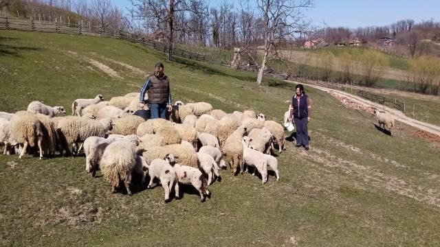 Otvaranje ugostiteljskih objekata dobra vest za ovčarei - © Milanko D.Agromedia