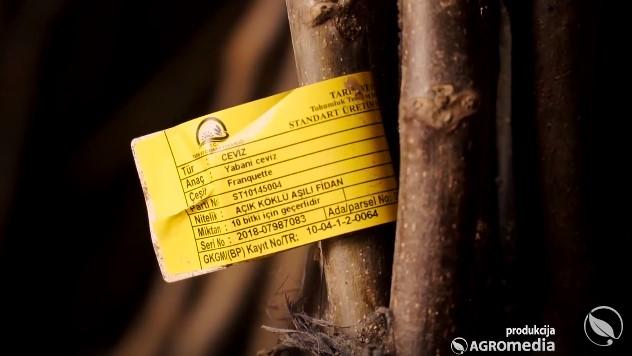 Čendler: Sertifikovane sadnice oraha sa sigurnim otkupom roda - © Agromedia