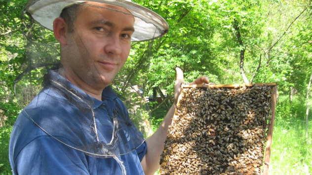 Nenad Milojković sa pčelama - © Foto: Nenad Milojković