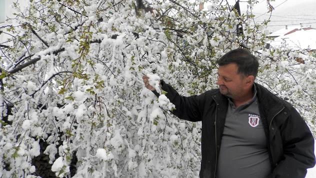 Sneg i grad već obrali voće u Novoj Varoši  - © Željko Dulanović