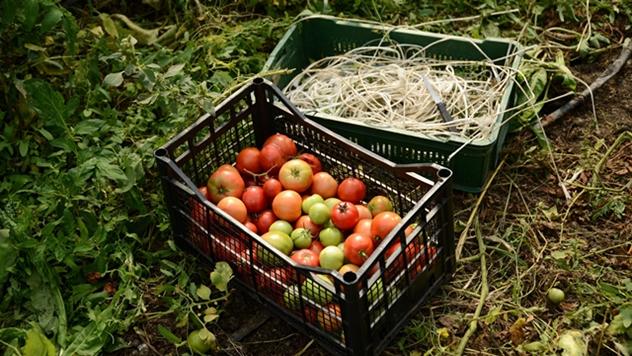 Organska farma - © Centar za organsku proizvodnju