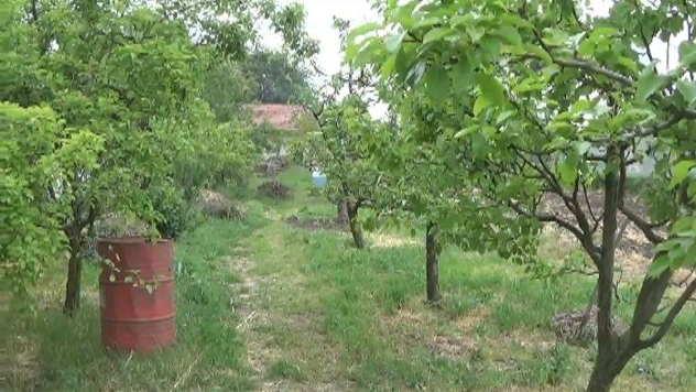 Organski voćnjak Tešanovića © Foto: Danijela Jankov