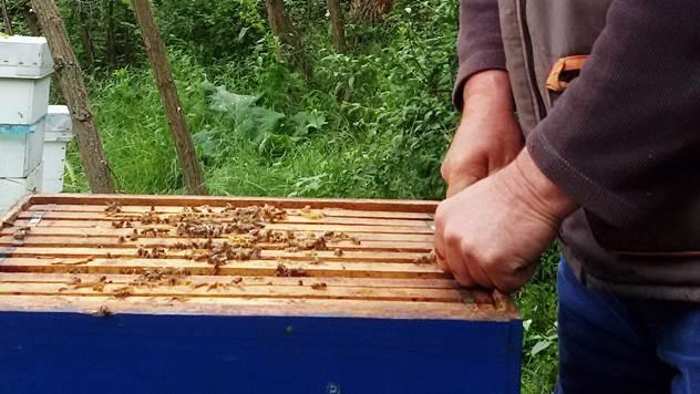Otvoren hotel za pčele u Hrvatskoj - © Julijana Kuzmic/Agromedia