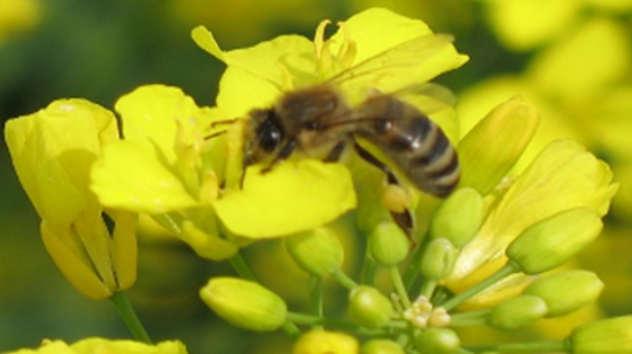 Mladi sve više zainteresovani da se bave pčelarstvom - © Agromedia