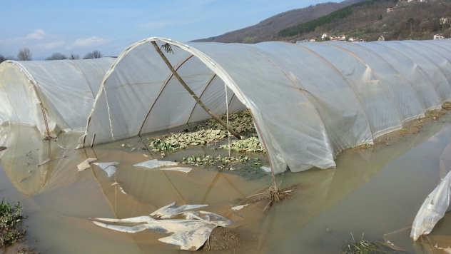 Poplavljen plastenik © Foto: Milosav Đokić