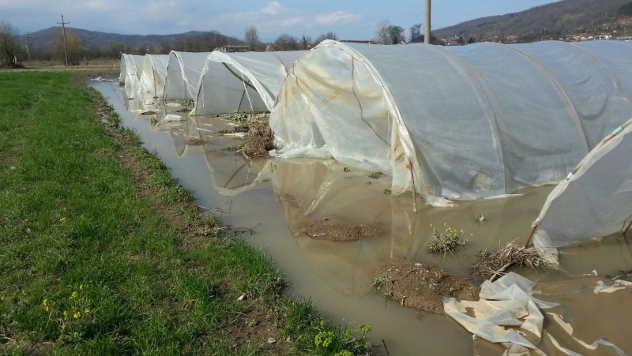 Poplavljeni plastenici © Foto: Milosav Đokić