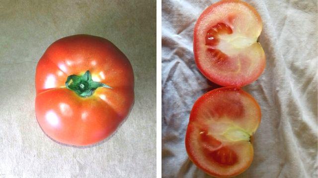 Veštački proizveden paradajz - © Zlatko Stojanović/Agromedia