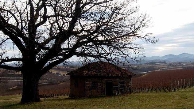 Vinogradi - © Foto: Biljana Nenković