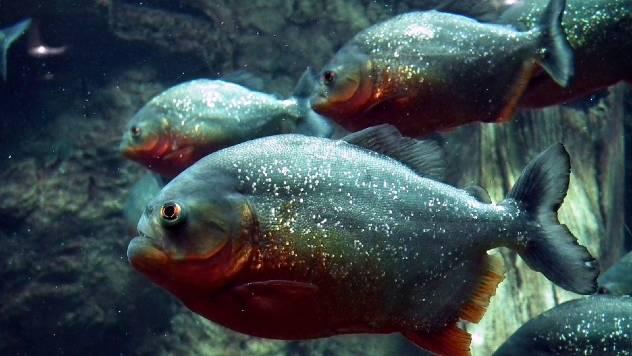 Saveti za početnike: Kako pravilno da hranite akvarijumske ribe - © Pixabay