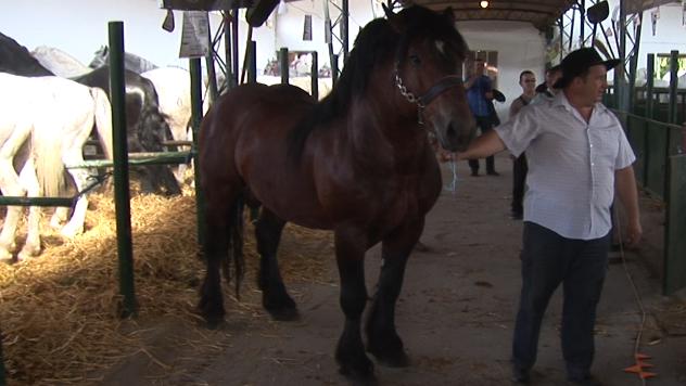 Konji na Sajmu u Novom Sadu - ©Agromedia